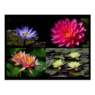SG Waterlily Collage Postcard #16