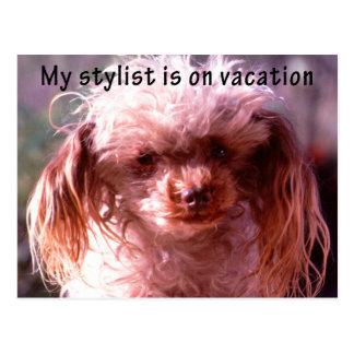 Shaggy Hair Dog Postcard