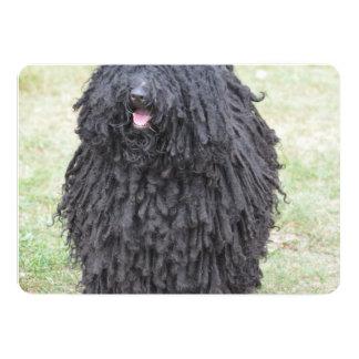 Shaggy Puli Dog Card
