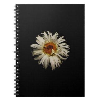 Shasta Daisey Spiral Notebooks