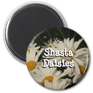 Shasta Daisies Magnets