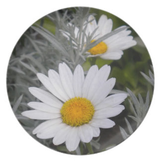 Shasta Daisies (w/Gold) Plate