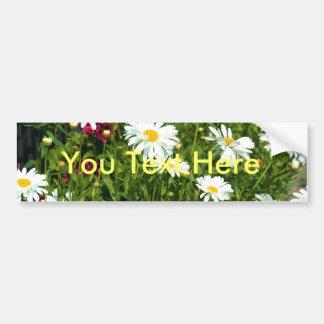 Shasta Daisy Car Bumper Sticker