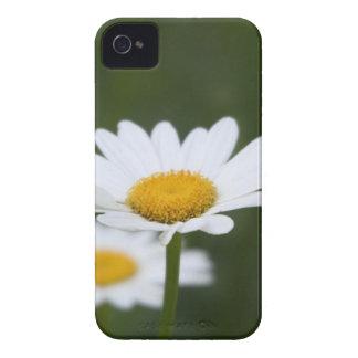 Shasta Daisy Case iPhone 4 Case