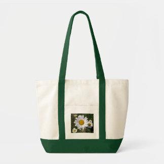 Shasta Daisy (Chrysanthemum maximum) Bags