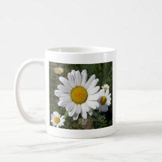 Shasta Daisy (Chrysanthemum maximum) Basic White Mug