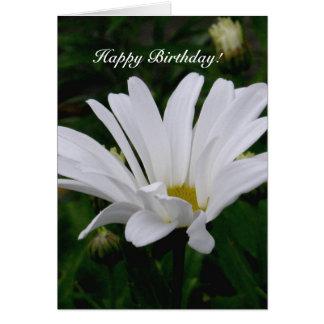 Shasta Daisy, Happy Birthday Greeting Card
