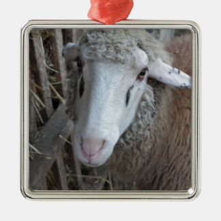 Sheep with hay christmas ornament