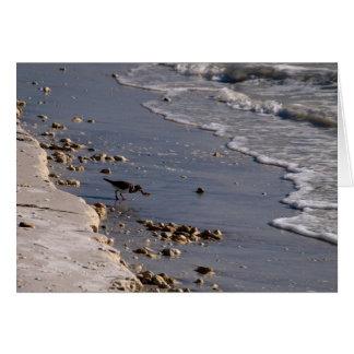 Shore Bird on Honeymoon Island Beach Card