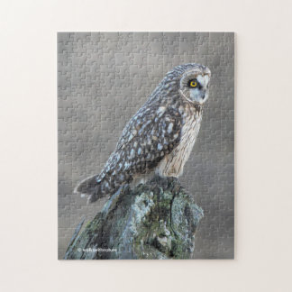 Short-Eared Owl in the Marsh Jigsaw Puzzle