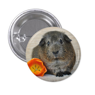 Short Hair, Smooth, Agouti Guinea Pig and Poppy 3 Cm Round Badge