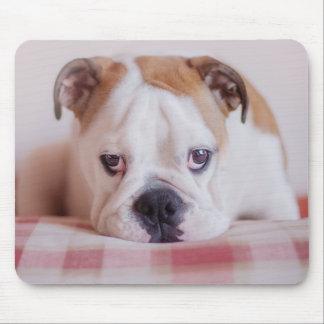 Shy English Bulldog Puppy Mouse Pad