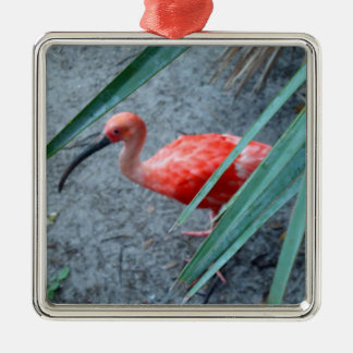 Shy Scarlet Ibis Christmas Ornament