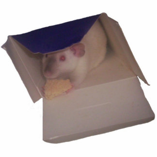 siamese dumbo rat in a box standing photo sculpture