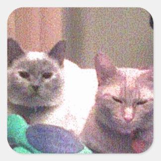 Siamese Himalayan Tabby Abysinnian Cat Kitty Gift Square Sticker