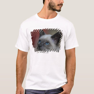 Siamese kitten T-Shirt