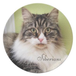 Siberian Cat Breed Platter Party Plates