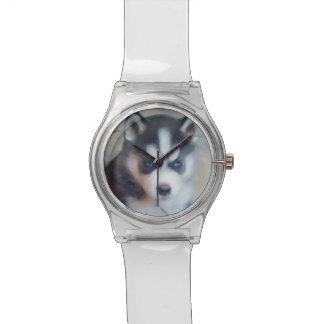 Siberian Husky dog Watch