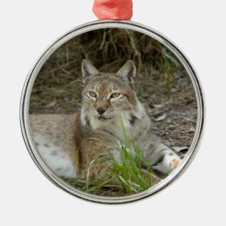 Siberian Lynx Christmas Ornaments