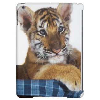Siberian Tiger Cub in basket