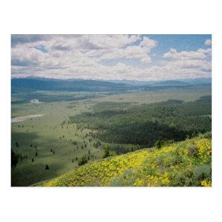 Signal Mountain View Postcard
