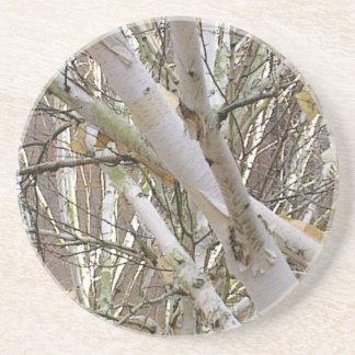 Silver Birch Branches Coaster