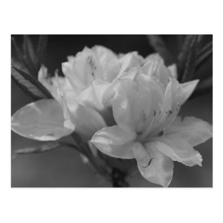 """Single bunch of wildflowers"" Postcard"