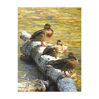Sitting Ducks Canvas Print