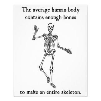 Skeleton Bones in the Average Human Body Flyer