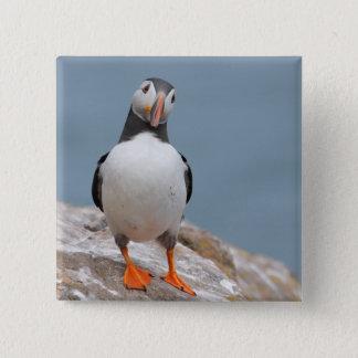 Skomer Island Puffins 15 Cm Square Badge