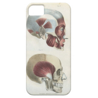 Skull and Muscles Anatomical Art Case For The iPhone 5