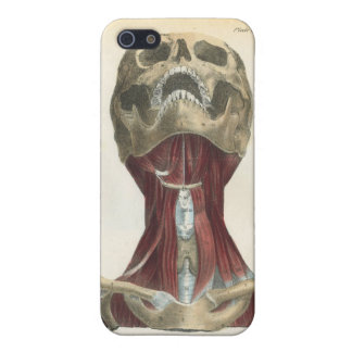 Skull and Muscles Anatomical Art Cover For iPhone 5/5S