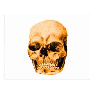 Skull Orange The MUSEUM Zazzle Gifts Postcards