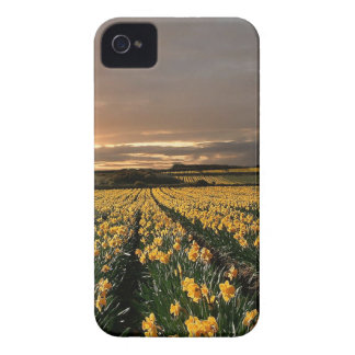 Sky Field Of Dreams iPhone 4 Case-Mate Cases