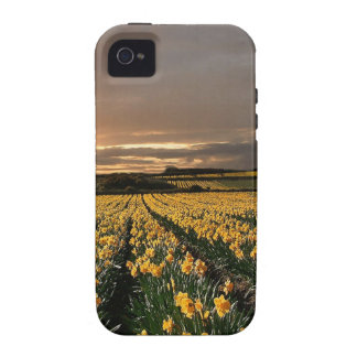 Sky Field Of Dreams iPhone 4 Covers