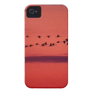 Sky Pigeon Sunset iPhone 4 Covers