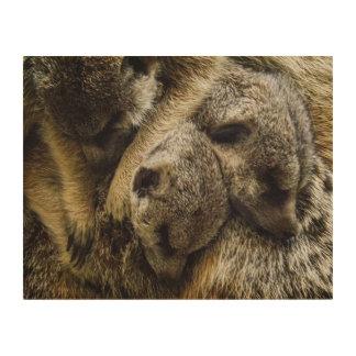 Sleeping Baby Meerkats in Dog Pile Wood Wall Art