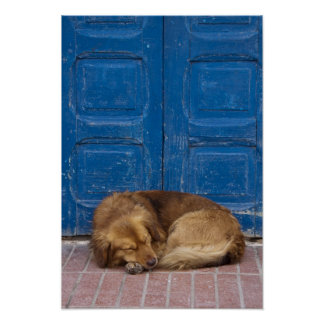 Sleeping dog, Essaouira, Morocco Poster