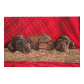 Sleeping Doxen Puppies Wood Wall Art