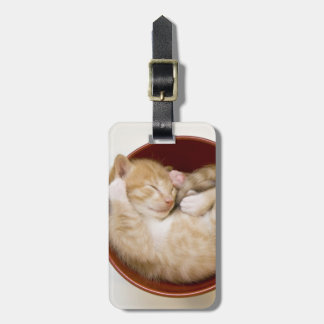 Sleeping kitten in simple red bowl on white luggage tag