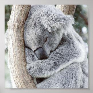 sleeping koala baby poster