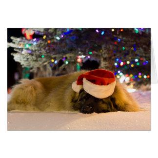 Sleeping Leonberger Christmas card