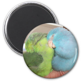 Sleeping Parrotlets Parrot sleeping magnet photo