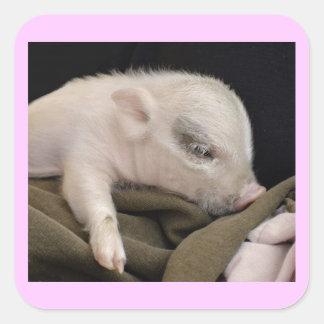 Sleeping Pig Stickers