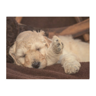 Sleeping Standard Poodle puppy Wood Wall Art