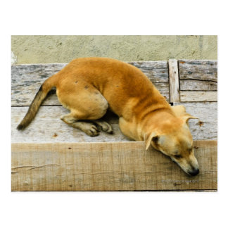 Sleeping street dog in Thailand Postcard