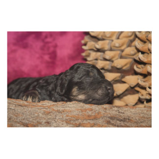 Sleepy poodle puppy wood print