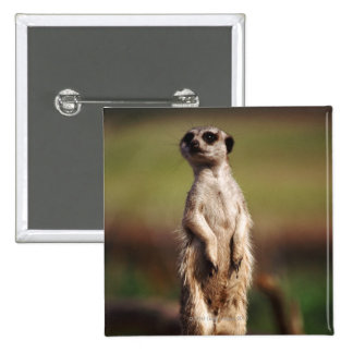 slender-tailed meerkat pin