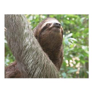 Sloth Climbing Postcard