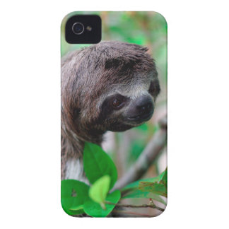 Sloth in tree Nicaragua iPhone 4 Covers